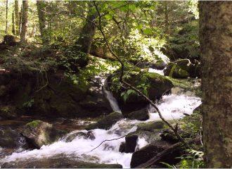Rivière située en aval de la cascade de Chorsin proche de notre gite la Fenière des hautes Chaumes situé dans le Forez proche de Chalmazel
